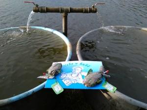 Výlov rybníka Rožmberk a Nebe v hubě