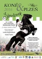 Koně & Plzeň 2016 Středověk, Nebe v hubě